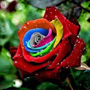 200Pcs Rainbow Rose Seeds Rare Flower Perennial Potted Rose Plant Seeds DIY Garden Seeds